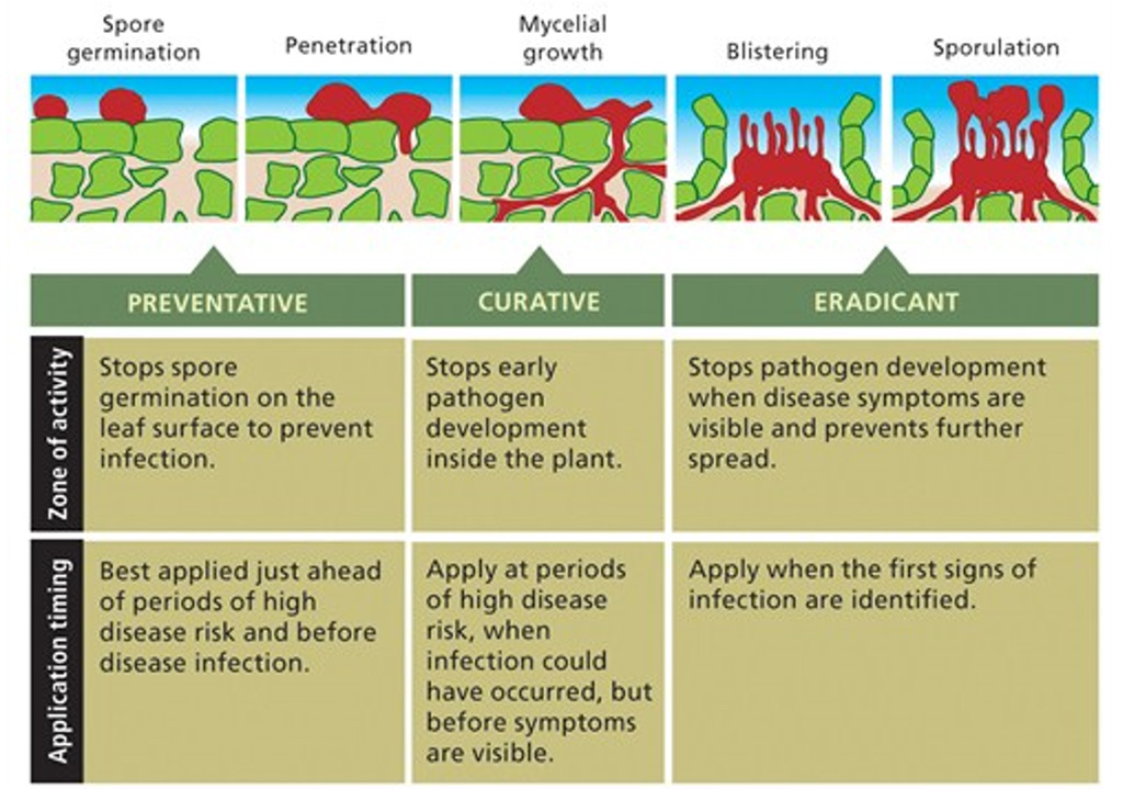 Disease stages graphic