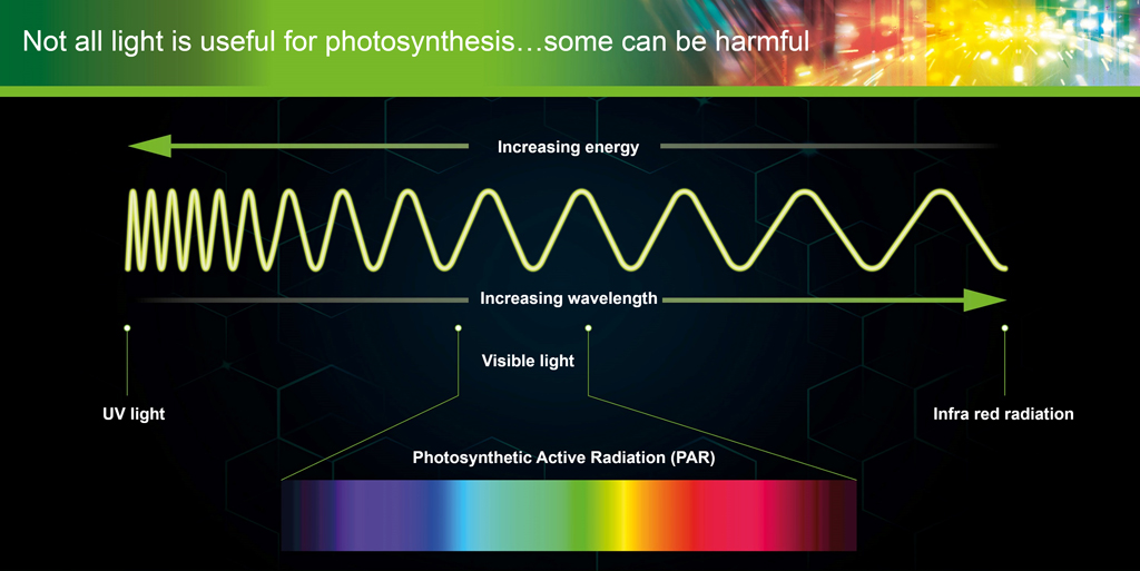 The PAR light spectrum includes some rays that are positively harmful to plant tissues