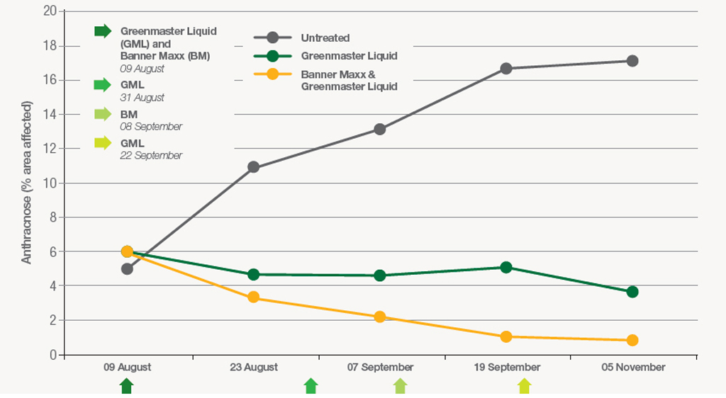 STRI trial results of nutrition and fungicide treatments on Anthracnose infection