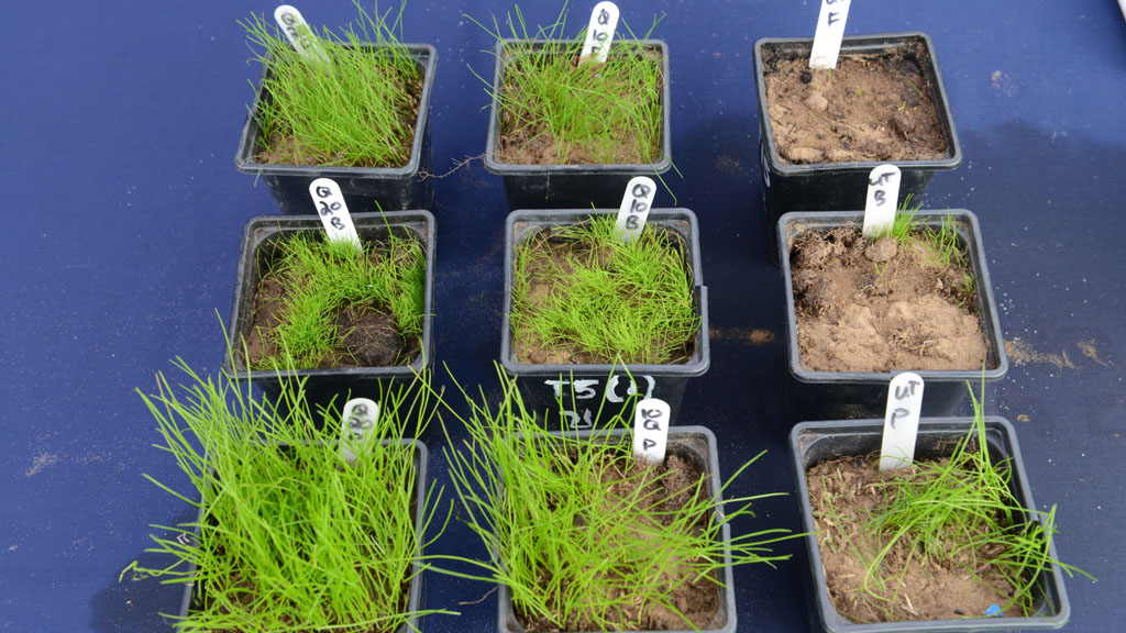 Qualibra pot trials of seedling establishment