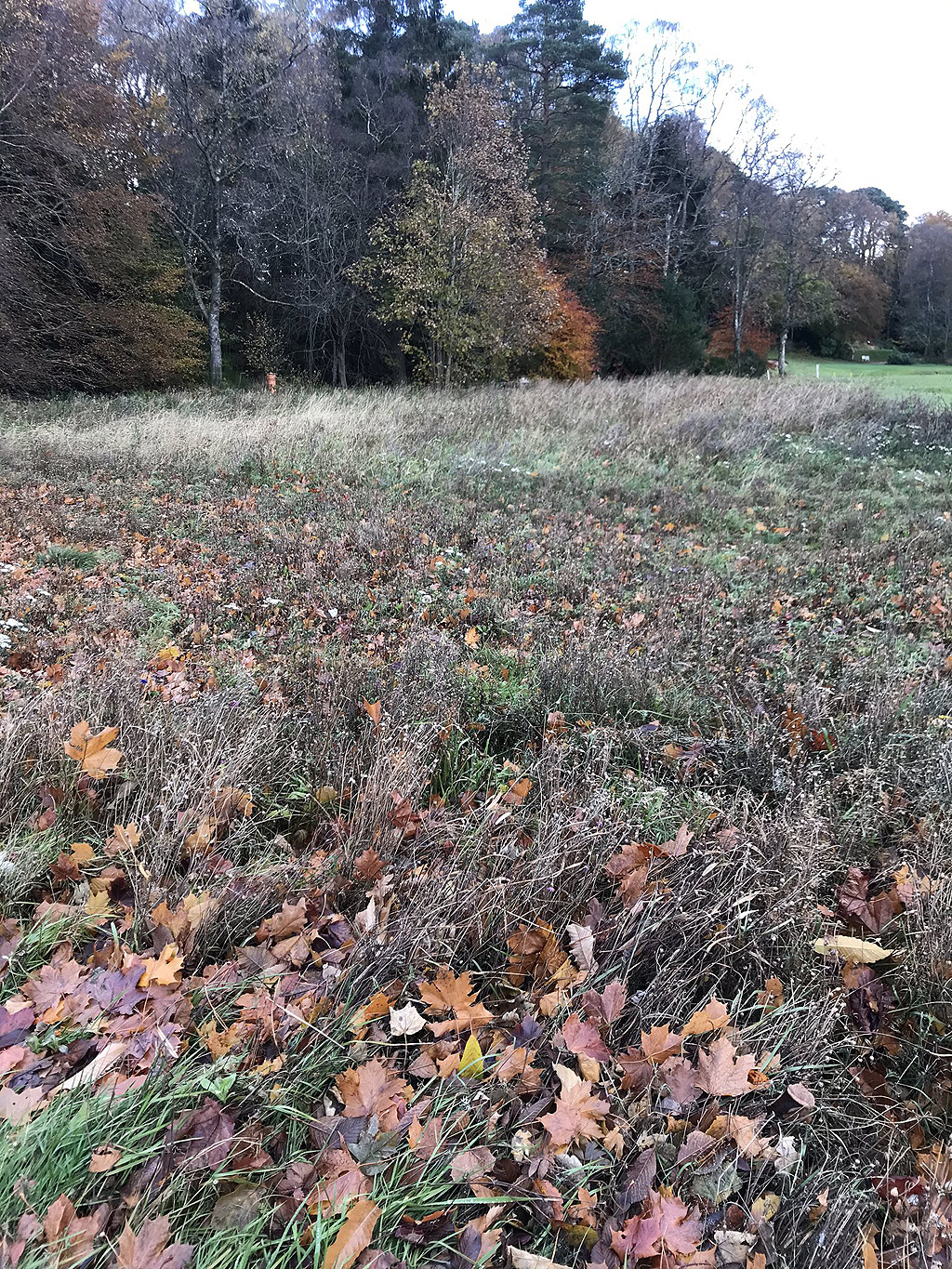 Banchory wildflower area bashed to drop out seeds in October