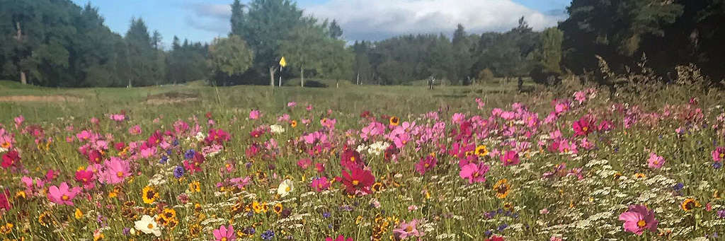 Banchory GC flowers