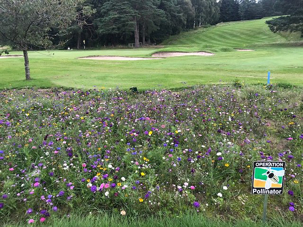 Banchory wildflower area