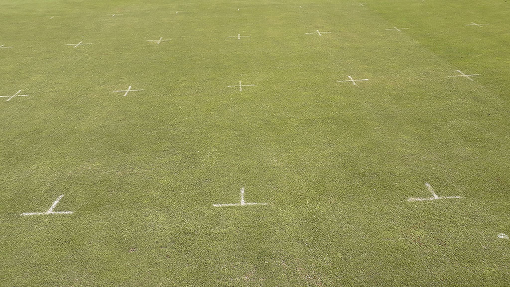 STRI Primo Maxx trial week 2 three day per week mowing