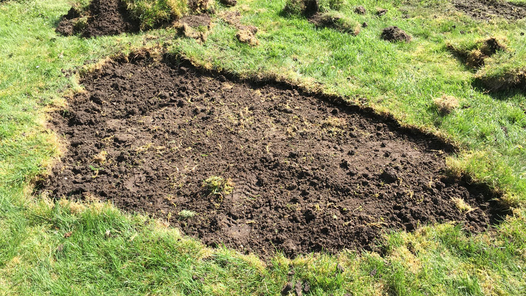 Chafer damage from root loss