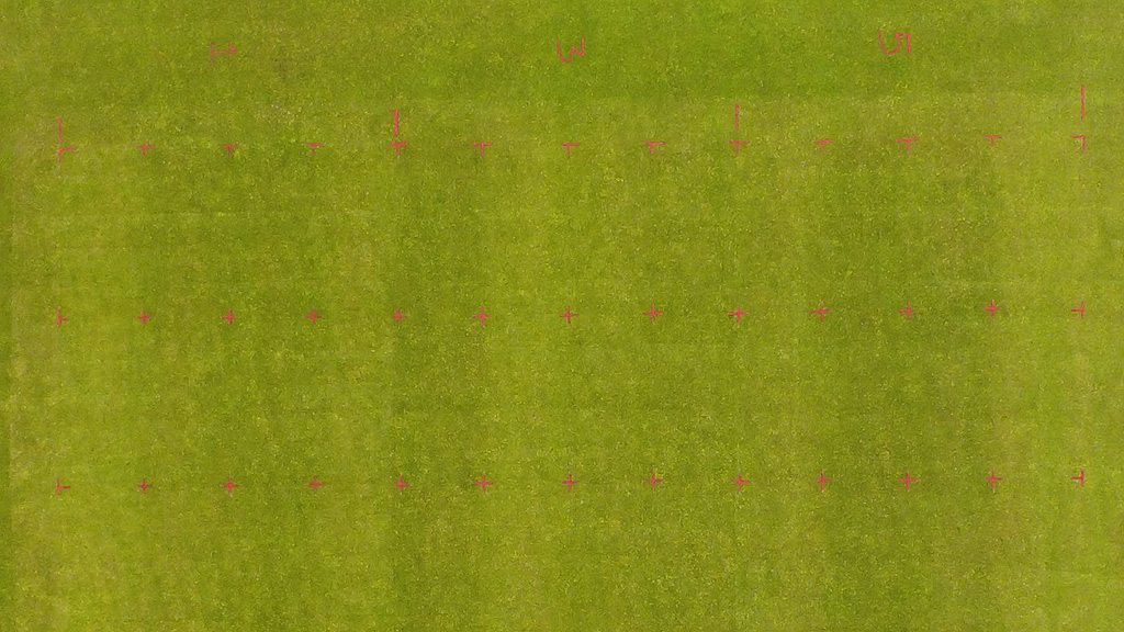 STRI Lockdown trial  Primo Maxx effects clear to see week 8
