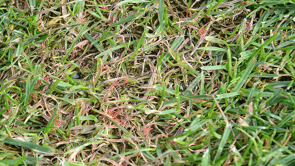 Red thread on fairway