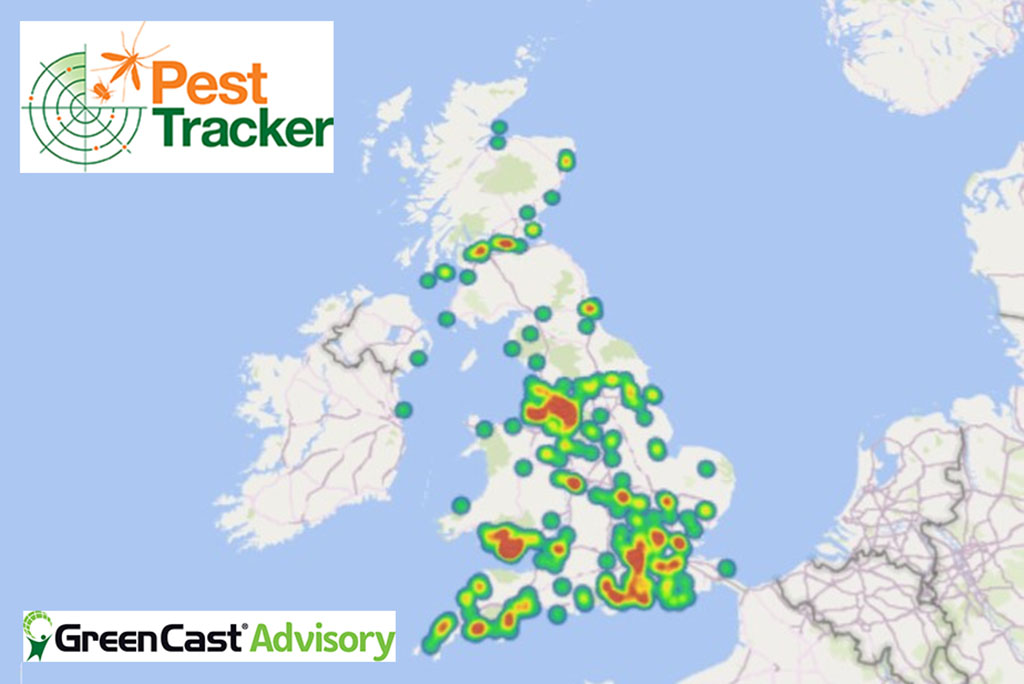 Crane fly emergence heat map from Pest Tracker sightings