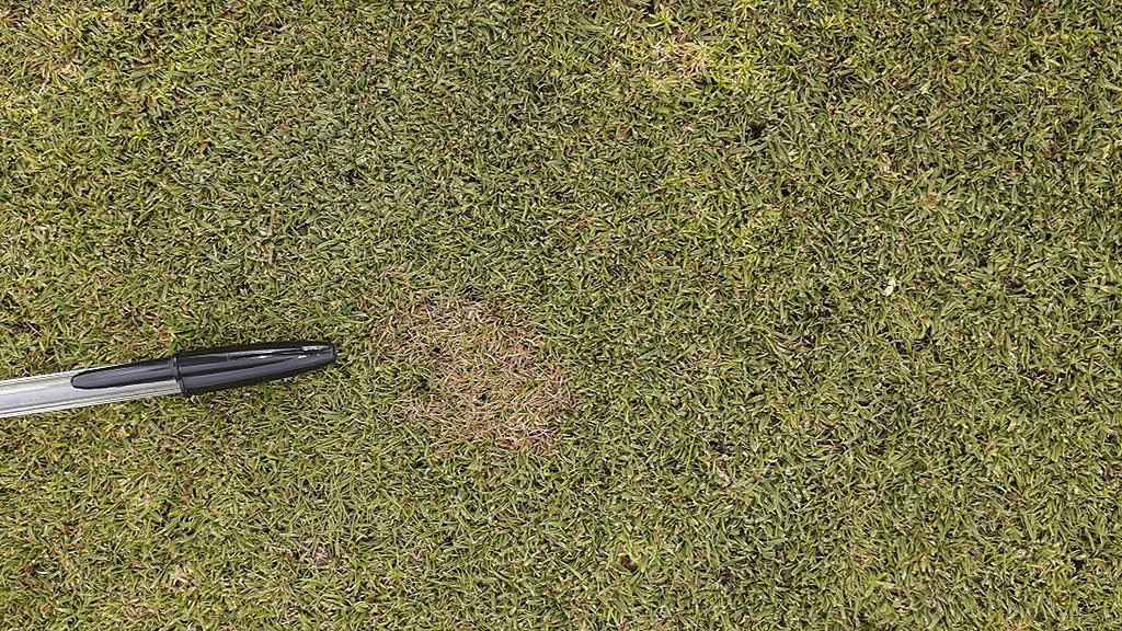 Disease on Unlock and Play trials for 9 Sept report