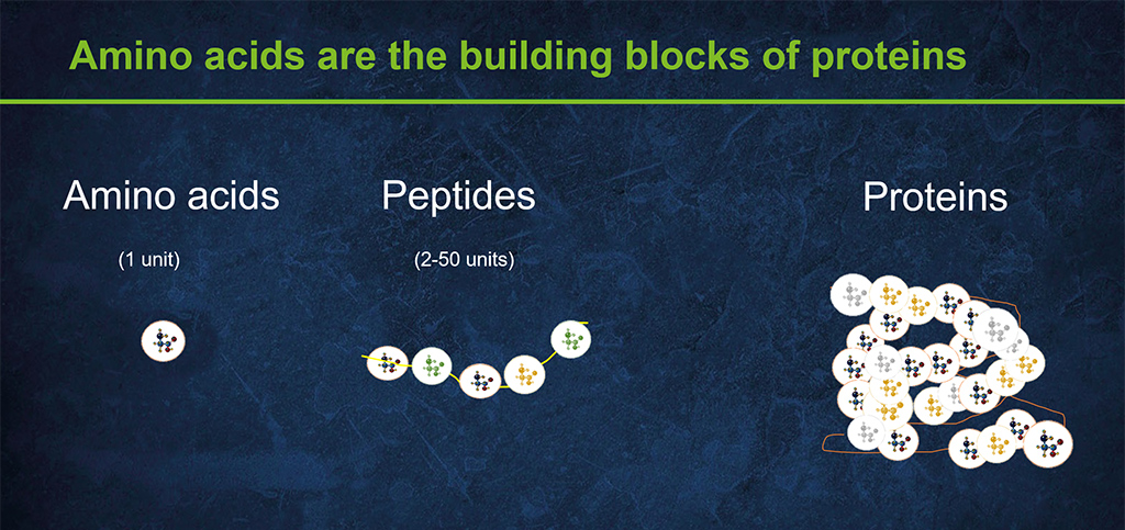 Amino acid building blocks