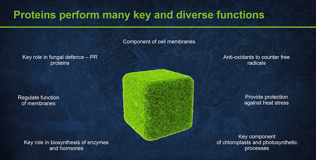 Protein function in the plant