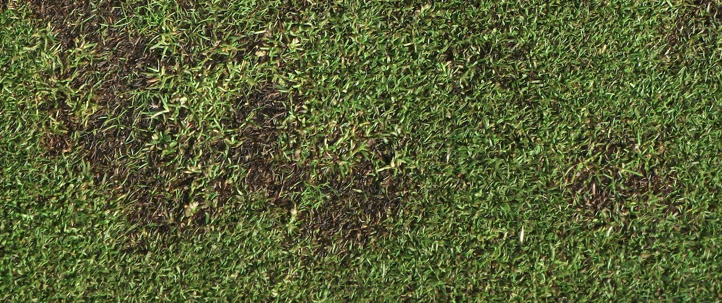 Take All Patch Turf Disease UK