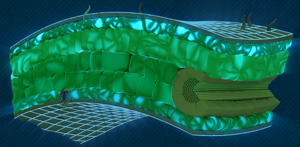 Hicure activity in the leaf