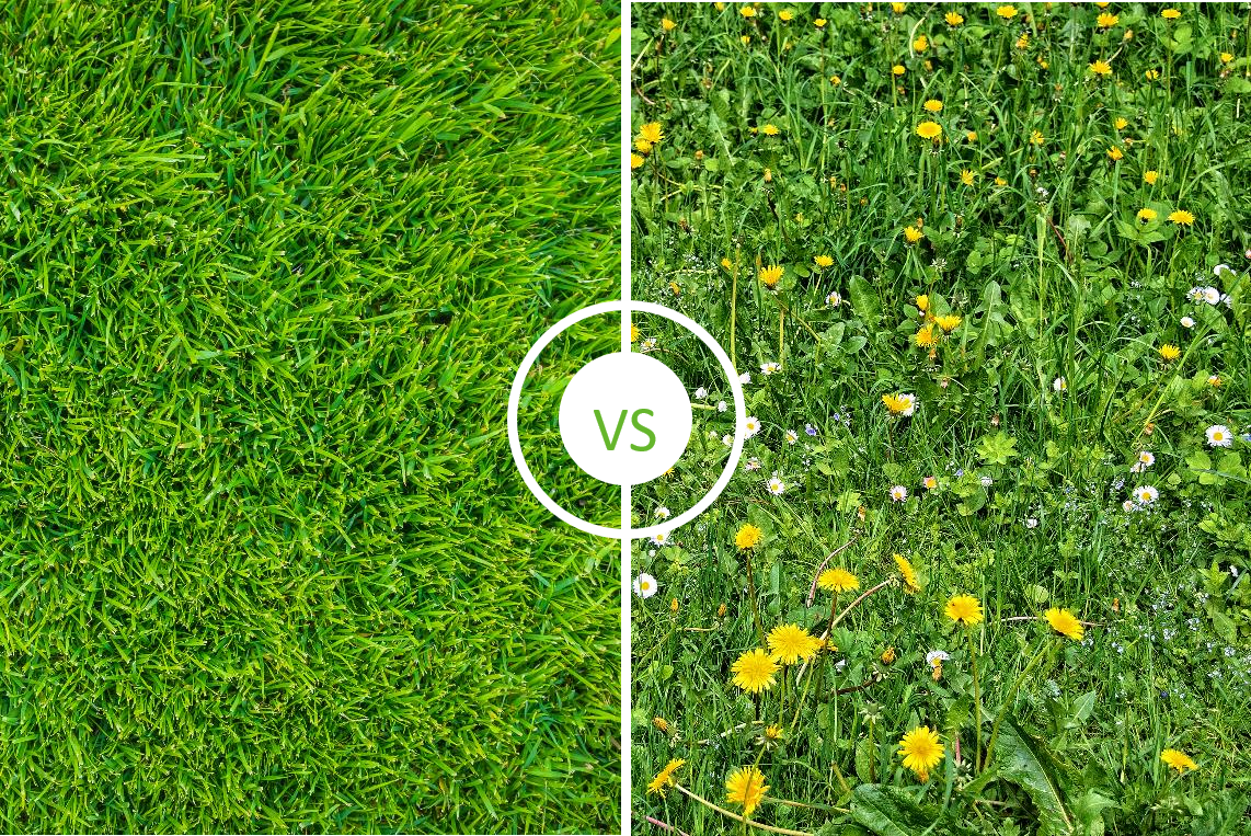 Overtake clean turf Vs weeds
