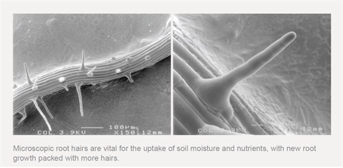 Root Hair Microscopy