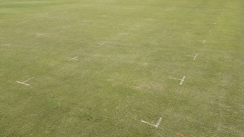 STRI Primo Maxx trial week 2 overall