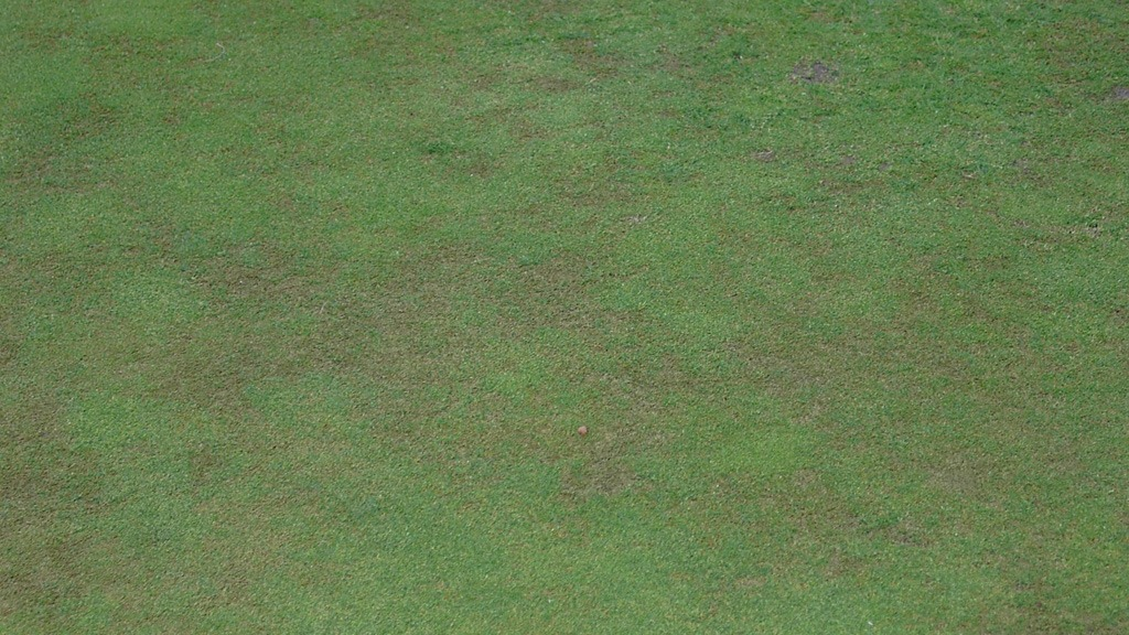 In the right summer conditions foliar Anthracnose infection can attack quickly and with serious effects