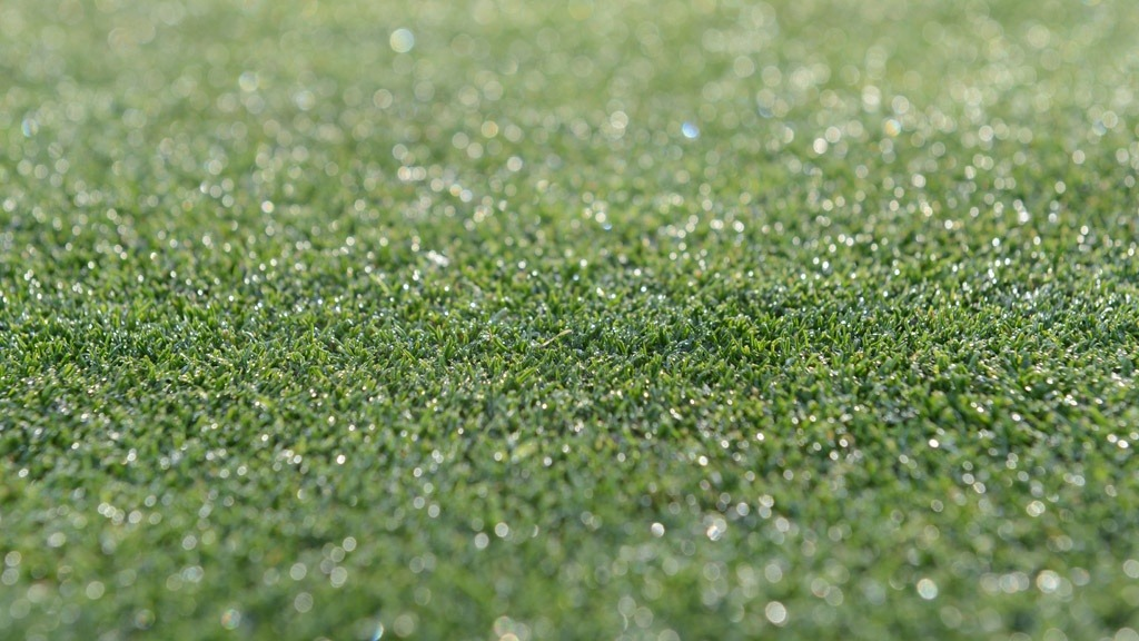 Dew on green turf surface