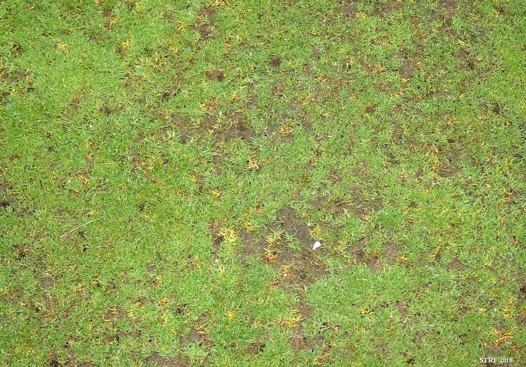 Anthracnose Basal rot